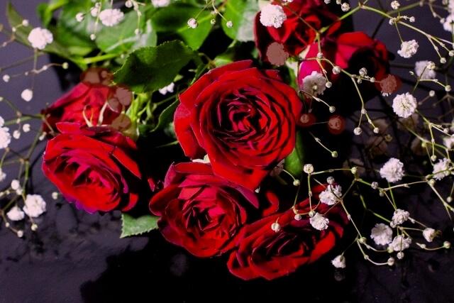 赤いバラ、華やかな女性のイメージ
